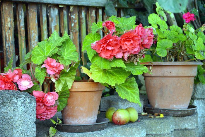 Pots de fleur et soucoupes
